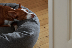 Dogbed M